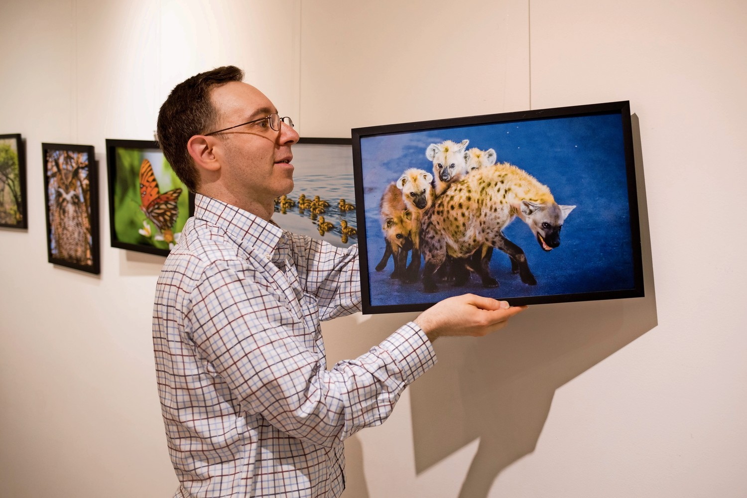 Mark Davis puts a photograph on the wall at Gallery 18 in the Riverdale Y for his exhibition 'Wildlife: Near and Far.' His photographs are a mix of animals from places as local as Van Cortlandt Park to as far flung as Kruger National Park in South Africa. It is on view until June 30.