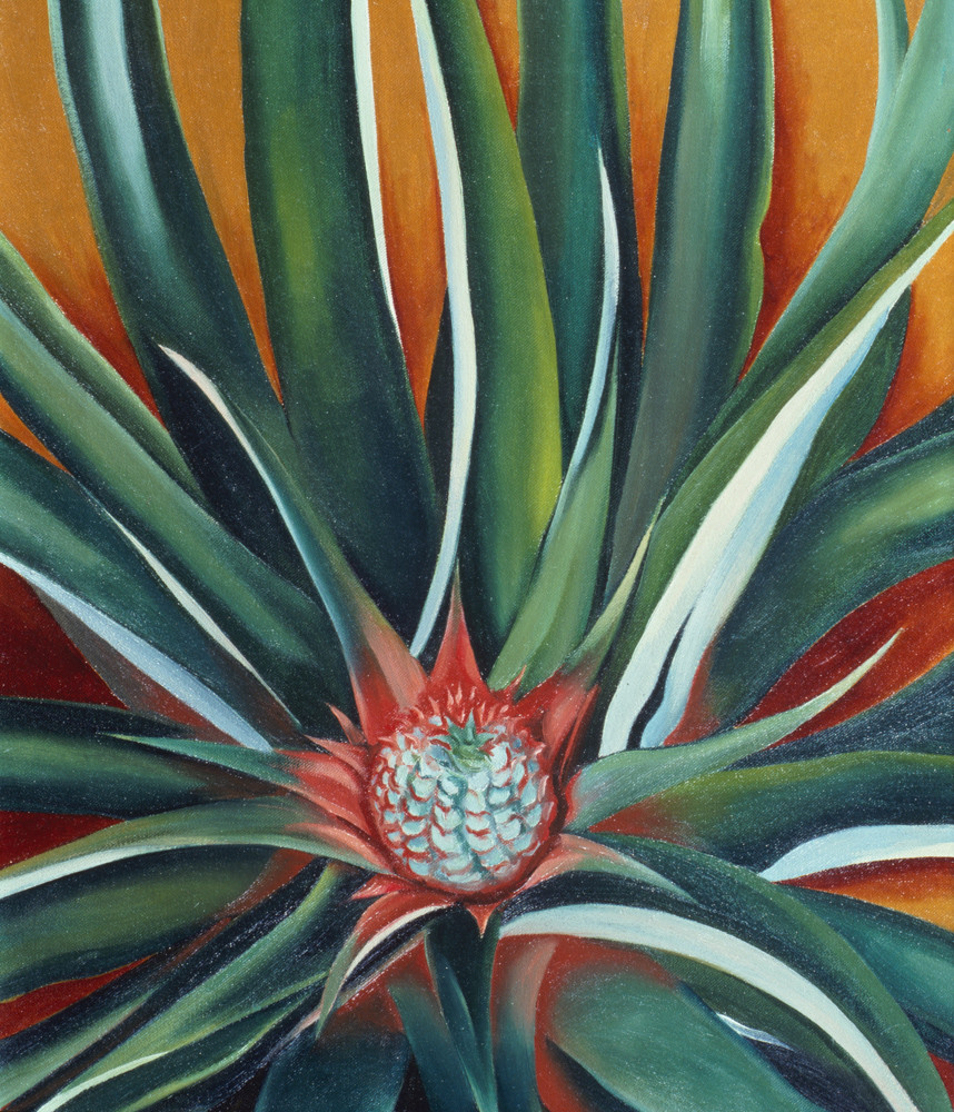 In 'Pineapple Bud,' Georgia O'Keeffe shows what will become a big pineapple, something she observed during a trip she took to Hawaii in 1939 to create commissioned work for the Hawaiian Pineapple Co., now known as the Dole Food Co.