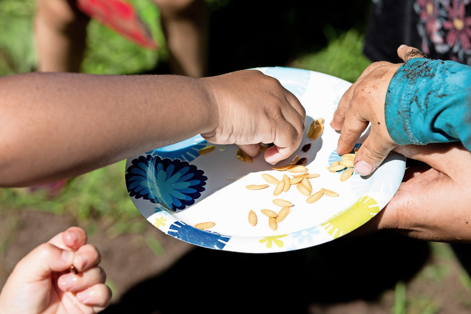 Riverdale Presbyterian Church Nursery School students take fruit seeds from a paper plate that they will then plant as part of the school's 'Explorations in Nature' summer program.