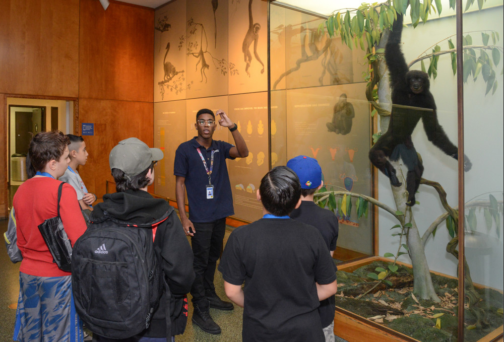 Justyn Simmons leads a tour at the American Museum of Natural History as part of the institution's museum education and employment program, which gives students the opportunity to work as tour guides over the summer. Simmons is a student at Stony Brook University, and is a graduate of the Celia Cruz Bronx High School of Music.