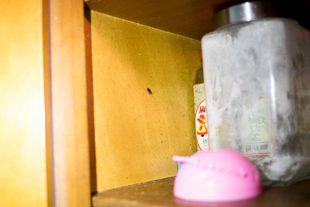 A roach crawls inside a cabinet in Jessie Torres' kitchen at Fort Independence Houses. If constant vermin, mold, flooding, and lack of hot water weren't enough to worry about, the health department reported two cases of Legionnaires' disease in Torres' building within the past year.