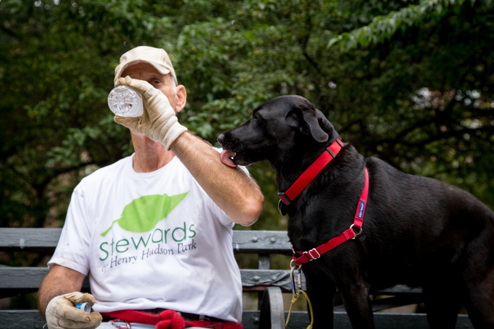 Mark Mason, a co-founder of the Stewards of Henry Hudson Park, stops for a drink of water while his dog, Missy, who is the official mascot of the Stewards of Henry Hudson Park, licks his arm. Mason and other volunteers were working on revitalizing a plant bed in Henry Hudson Park.