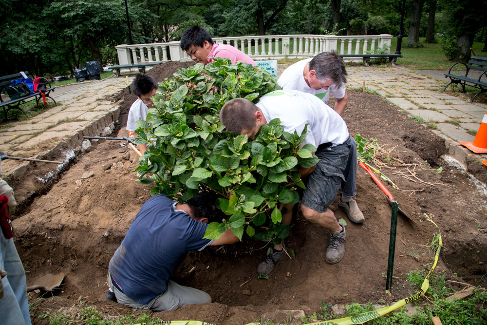 The Stewards of Henry Hudson Park collectively pull a shrub out of the ground in the park. The volunteer group works every year to revamp and revitalize Henry Hudson Park.
