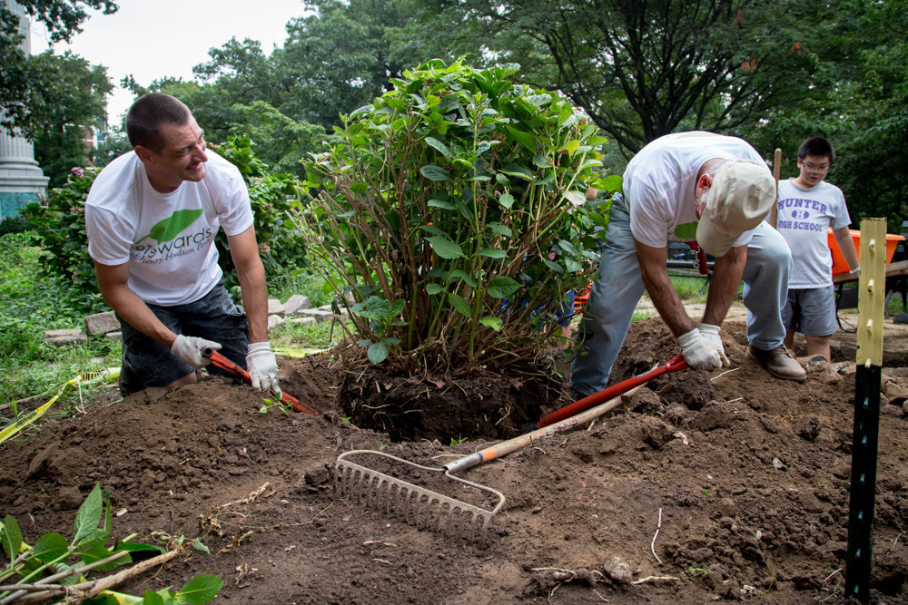 Stewards of Henry Hudson Park co-founders Daniel Reynolds and Mark Mason, right, work on safely removing a plant from the ground as part of an effort to revamp and revitalize the park.