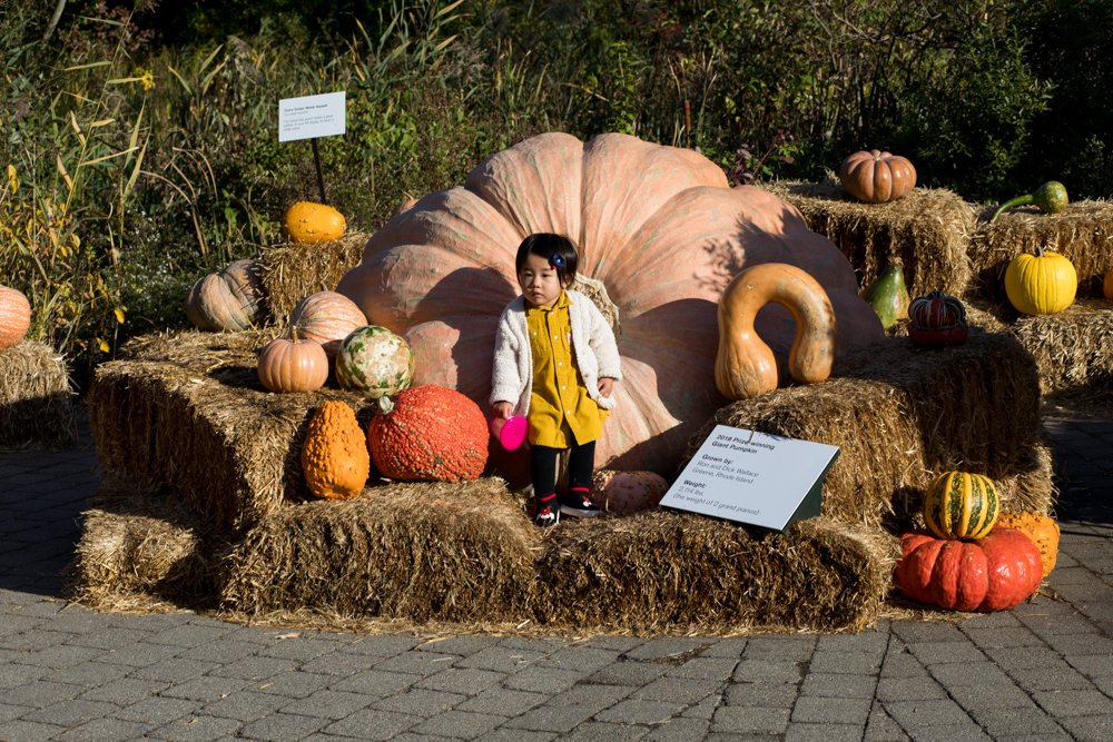 Yuasa Fujita stands in front of a one-ton pumpkin, posing for a picture at the New York Botanical Garden. The garden brought together some of the biggest pumpkins in the world, including a whopping 2,528-pound behemoth.