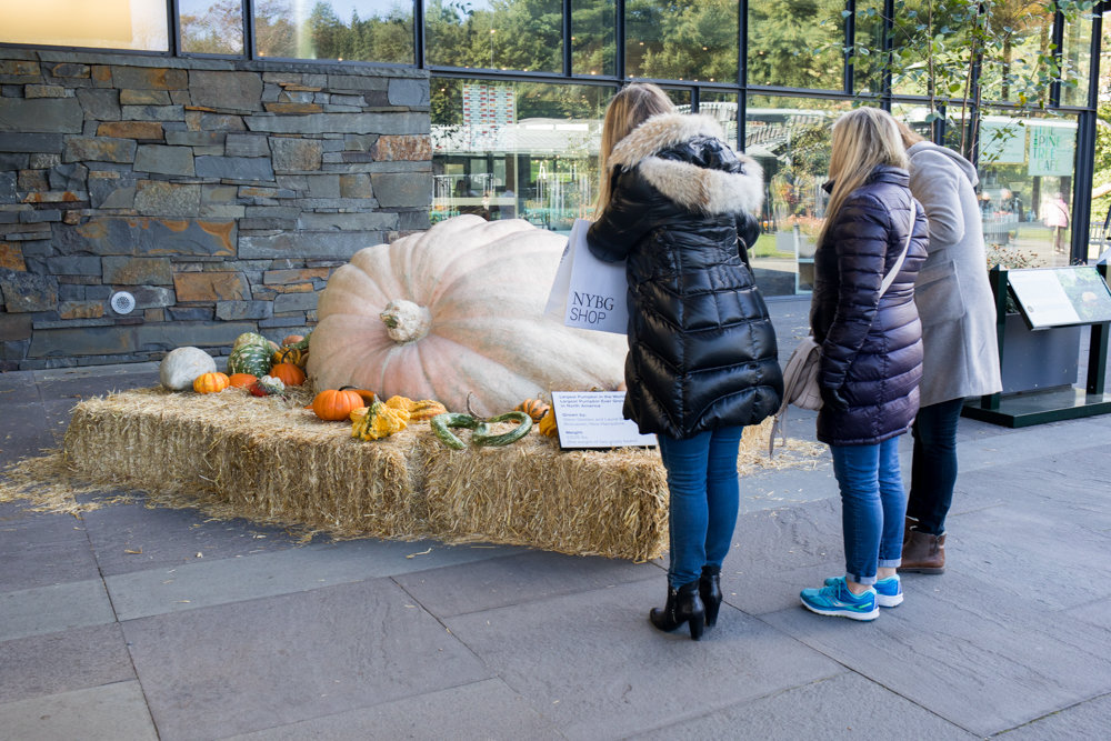 Visitors at the New York Botanical Garden look at the largest pumpkin in the world, a 2,528-pound behemoth from New Hampshire.
