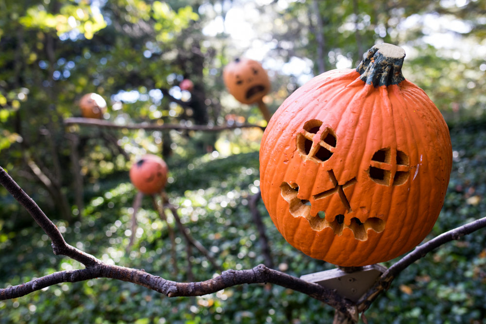 In the Spooky Pumpkin Garden at the New York Botanical Garden, more than 100 scarecrows with jack-o'-lanterns for heads intermingle with more than 1,000 gourds and pumpkins, including several giant ones.