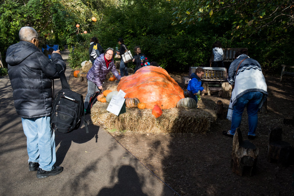 Visitors at the New York Botanical Garden take pictures with a pumpkin weighing more than 1,400 pounds in the Spooky Pumpkin Garden.