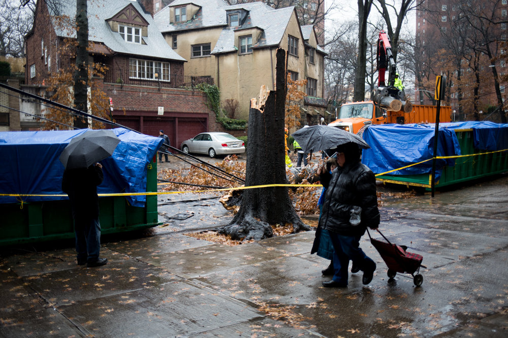 Pedestrians look at the damage wrought by a tree that collapsed along Sedgwick Avenue between Van Cortlandt Avenue West and Stevenson Place.