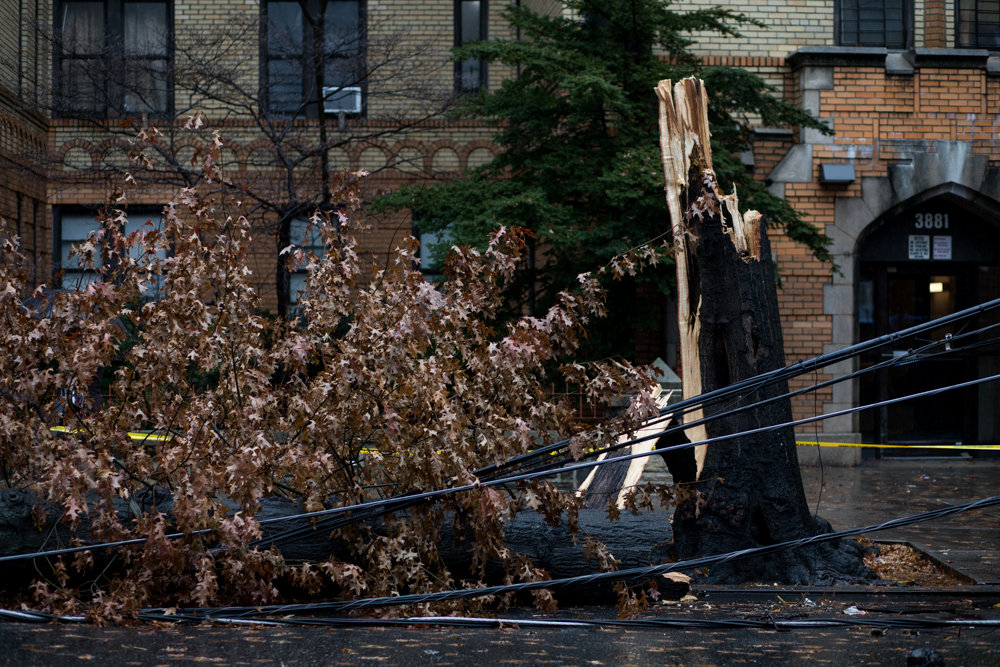 A collapsed tree along Sedgwick Avenue between Van Cortlandt Avenue West and Stevenson Place brought down power lines and backed up traffic significantly on Dec. 21.