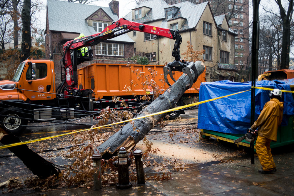 A parks department worker uses a crane to lift a large portion of a collapsed tree in order to release so that it snaps where another worker used a chainsaw to cut it.