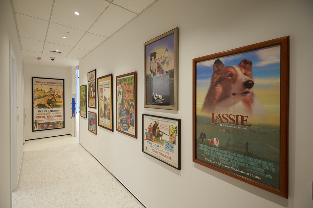 Dogs that are entertainment and pop culture fixtures such as Lassie are on display at the American Kennel Club Museum of the Dog.
