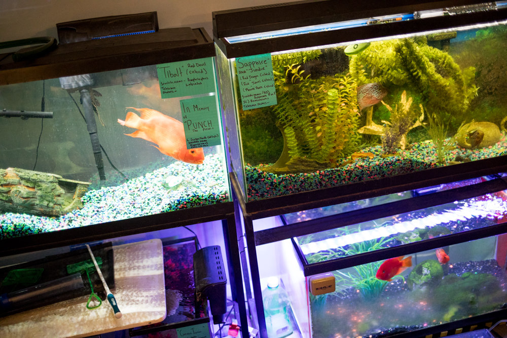 When the mercury sunk to single digits Jan. 21, it was a good thing Jason Bonano's heat was working so that his fish could live to swim another day. But some of Bonano's neighbors at Marble Hill Houses reported an inconsistent mix of experiences with heat in their West 225th Street building. For some, it was much too cold, while for others, just the opposite.