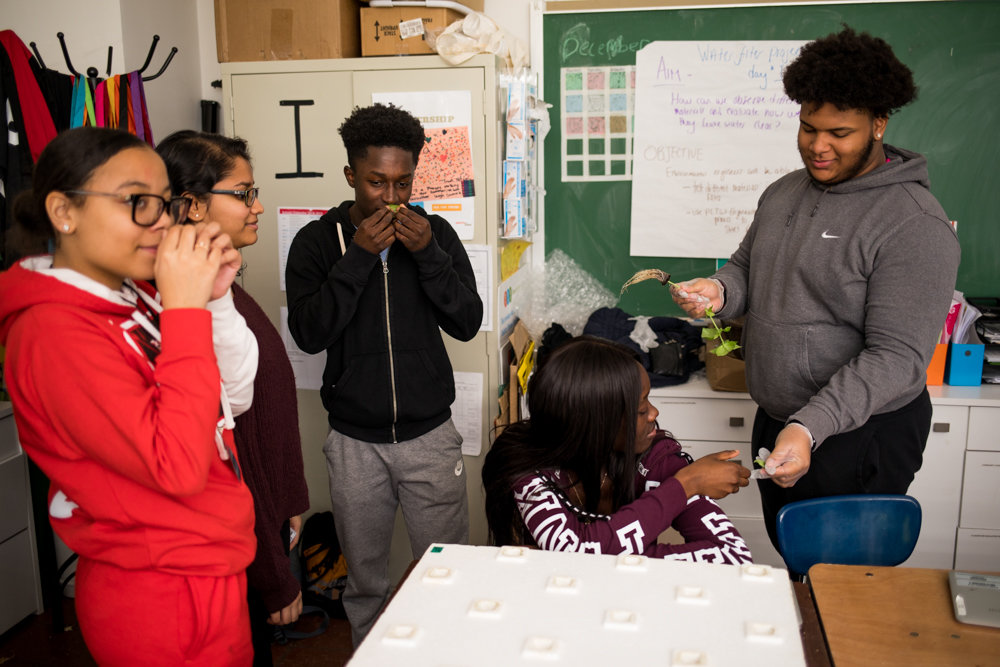 Students at DeWitt Clinton High School sample basil grown in the school's hydroponics lab where a menagerie of vegetables grow in climate-controlled conditions. The lab-grown food is served at lunch and given to the community. Hydroponics is a method of growing food without soil.