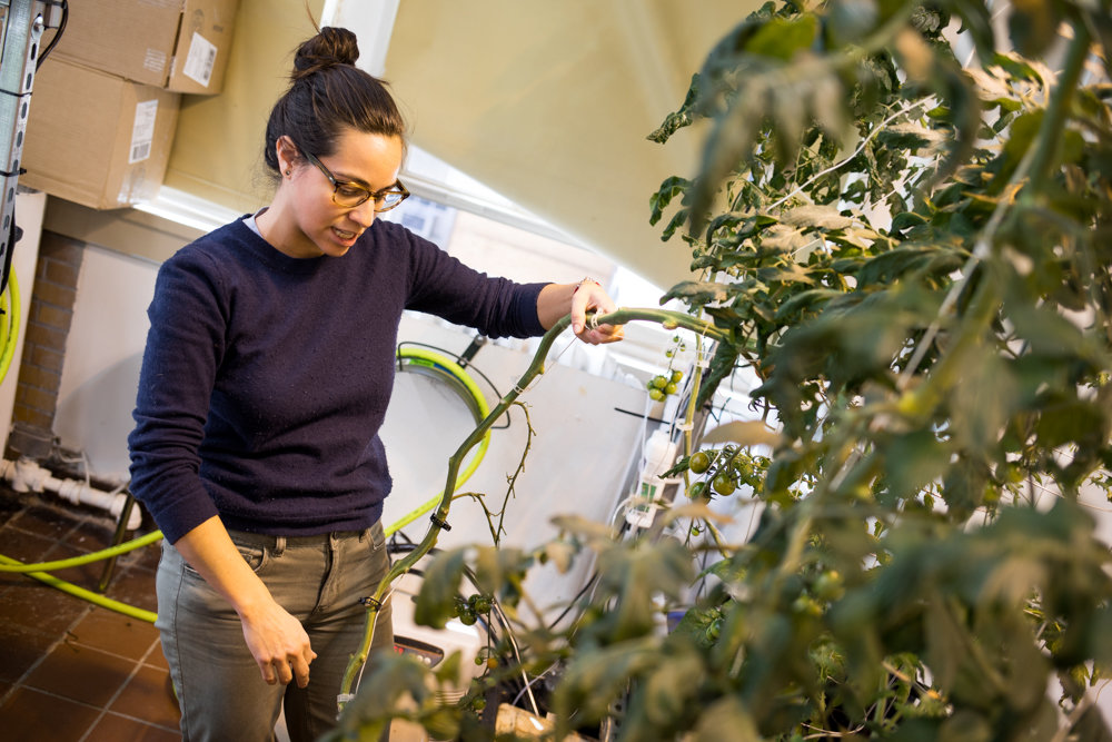 Erika Nillo, farm manager for Teens for Food Justice, talks about the way in which tomatoes grow in the hydroponics lab at DeWitt Clinton High School. Hydroponics is a method of growing food without soil.
