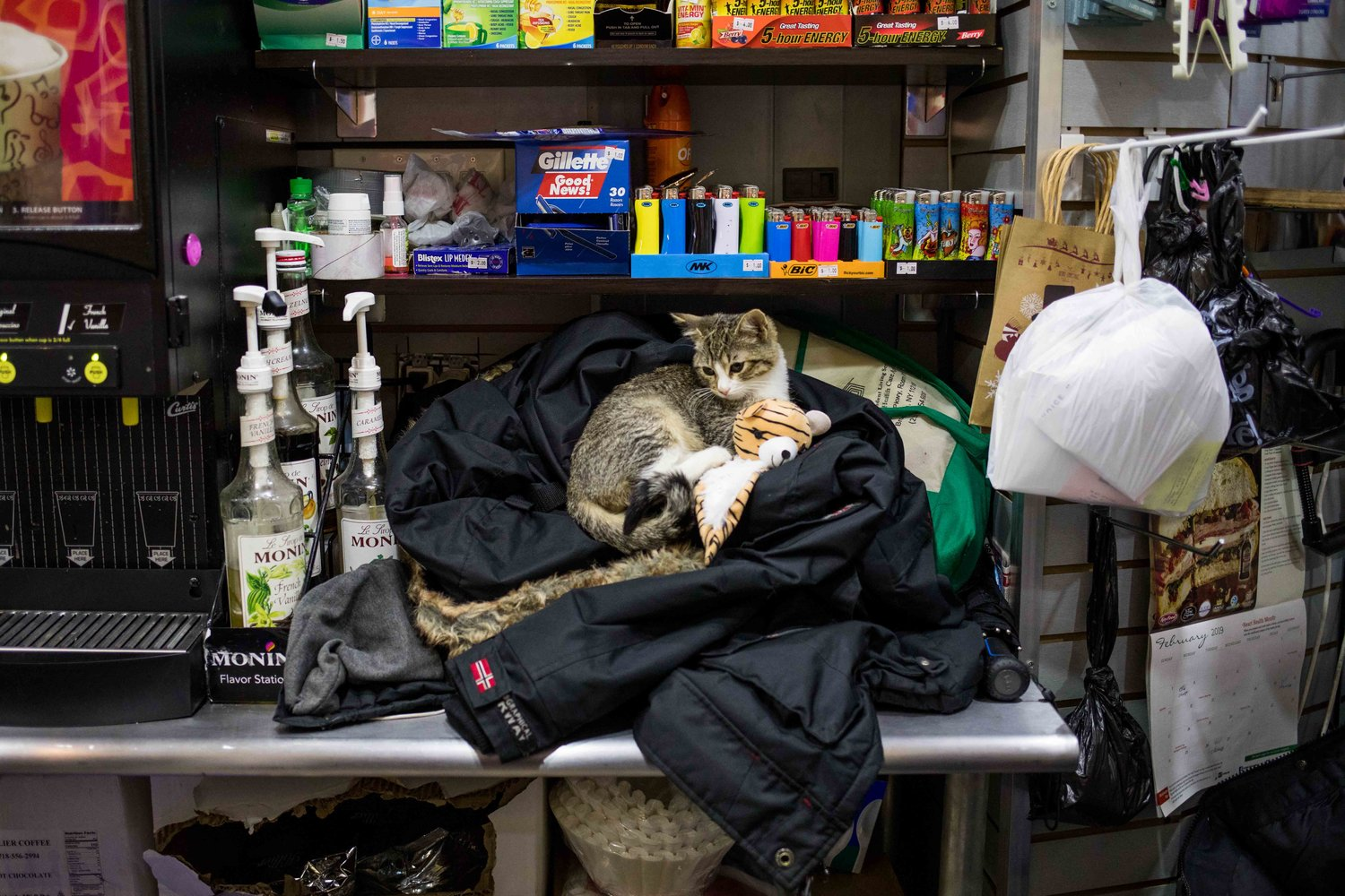 Luna, a 2-month-old kitten, rests on a jacket behind the counter at Ismael's Gourmet Deli on West 238th Street in Kingsbridge. She was catnapped from the bodega Feb. 23. A wanted poster from the 50th Precinct and widespread media coverage galvanized the community to help find Luna, who was returned safe and sound Feb. 28.