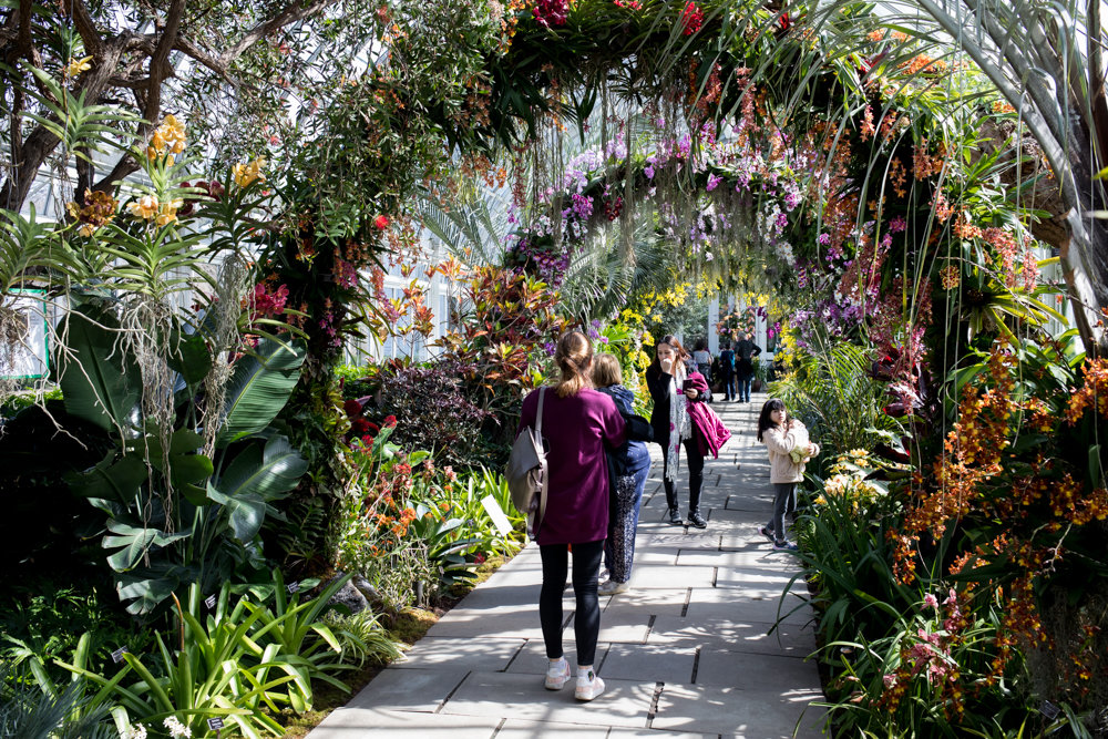 Visitors walk under arches made of orchids at the New York Botanical Garden. This year's orchid show was inspired by Singapore, where the colorful plant is the national flower and is famed for its orchid-laden arches. 'The Orchid Show: Singapore' is on display through April 28.