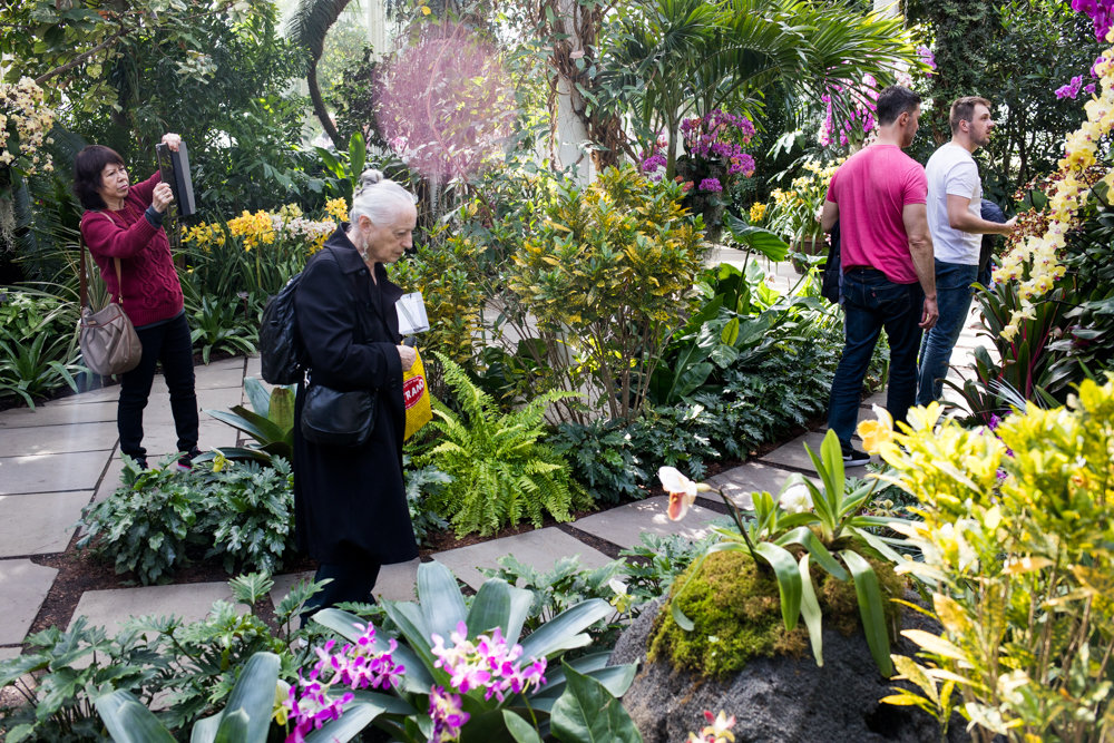 Visitors to the New York Botanical Garden look at and take pictures of the myriad orchids on display in 'The Orchid Show: Singapore.'