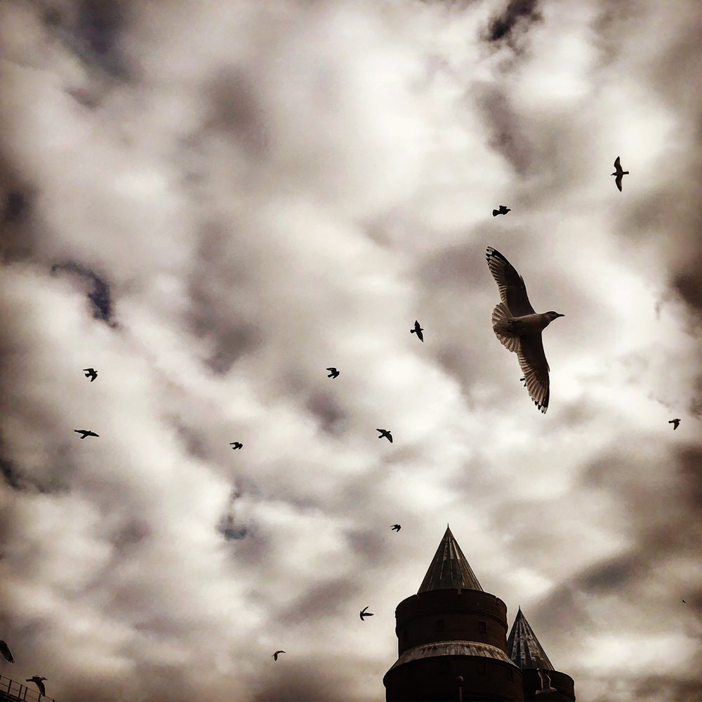 Jordan Moss photographed a sky full of birds above the Kingsbridge Armory. This picture is included in the exhibition 'Everywhere We Look,' on display at Gallery 505 through May 17.