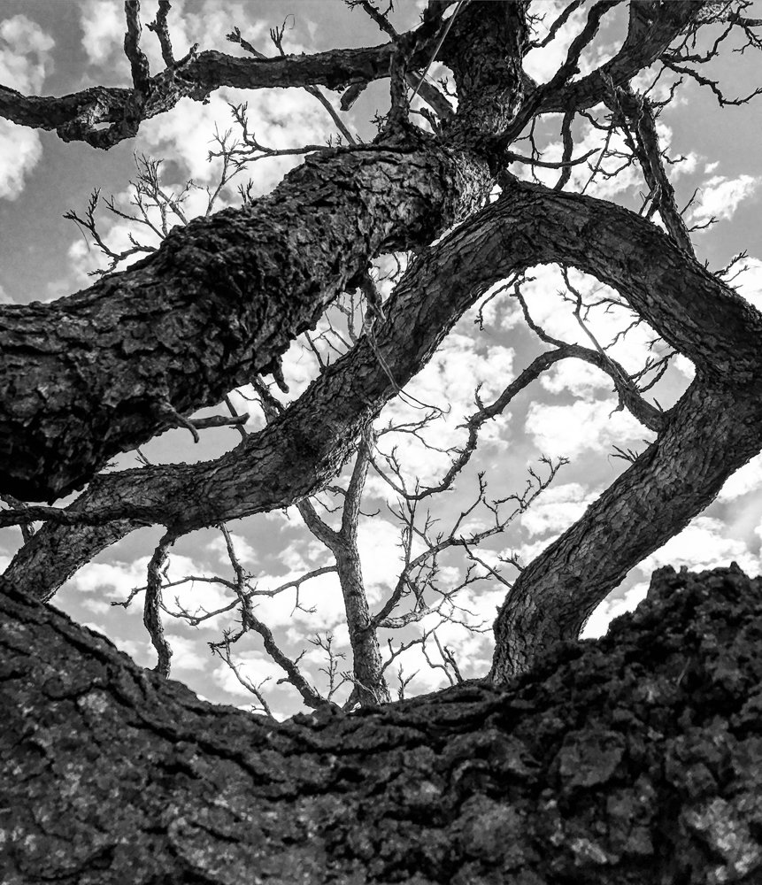 Jordan Moss photographed a tangle of branches at the New York Botanical Garden in 2017. An exhibition of his photographs, 'Everywhere We Look,' is on display at Gallery 505 through May 17.