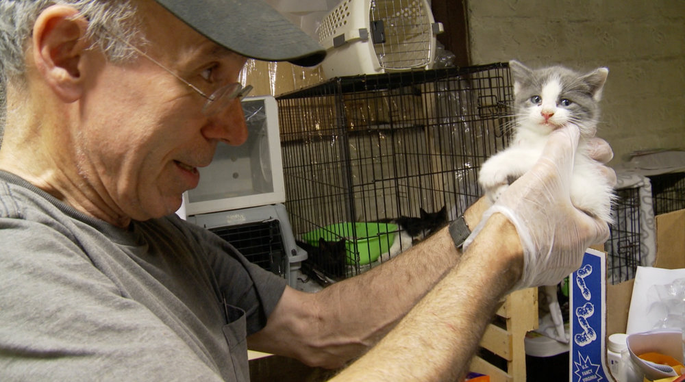 Stuart Siet holds a kitten in a scene from 'The Cat Rescuers,' a documentary profiling four volunteers in Brooklyn who engage in trap-neuter-return, a process that helps manage stray cat populations. The film has its theatrical release July 5 at IFC Center in Greenwich Village.