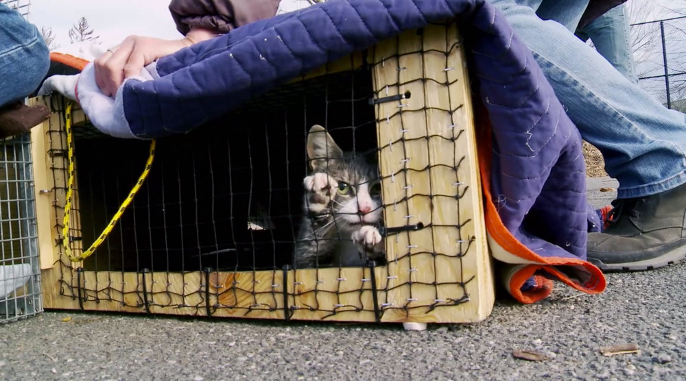 A cat paws at the mesh of a trap in a scene from the documentary film 'The Cat Rescuers.' The cat is later taken to a vet to be spayed or neutered, as well as vaccinated.