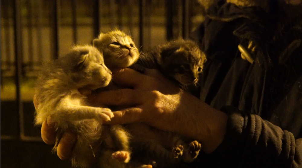 'The Cat Rescuers' is a documentary that tells the story of four volunteers in Brooklyn who engage in trap-neuter-return, a process that helps manage stray cat populations.