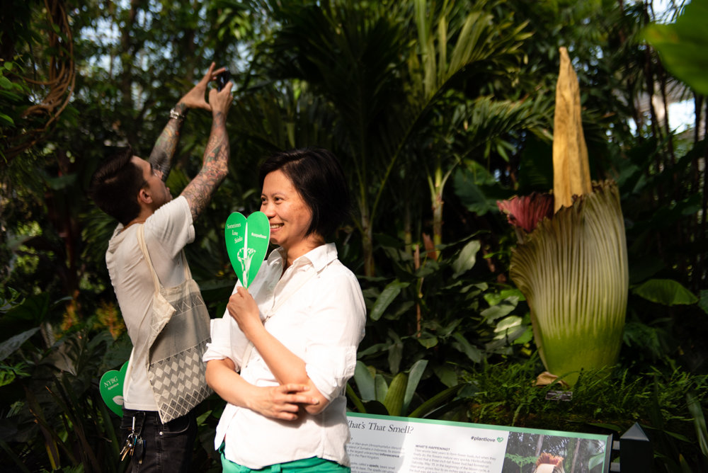 Despite its foul smell, the corpse flower at the New York Botanical Garden managed to attract throngs of visitors who endured the stench for the sake of pictures.