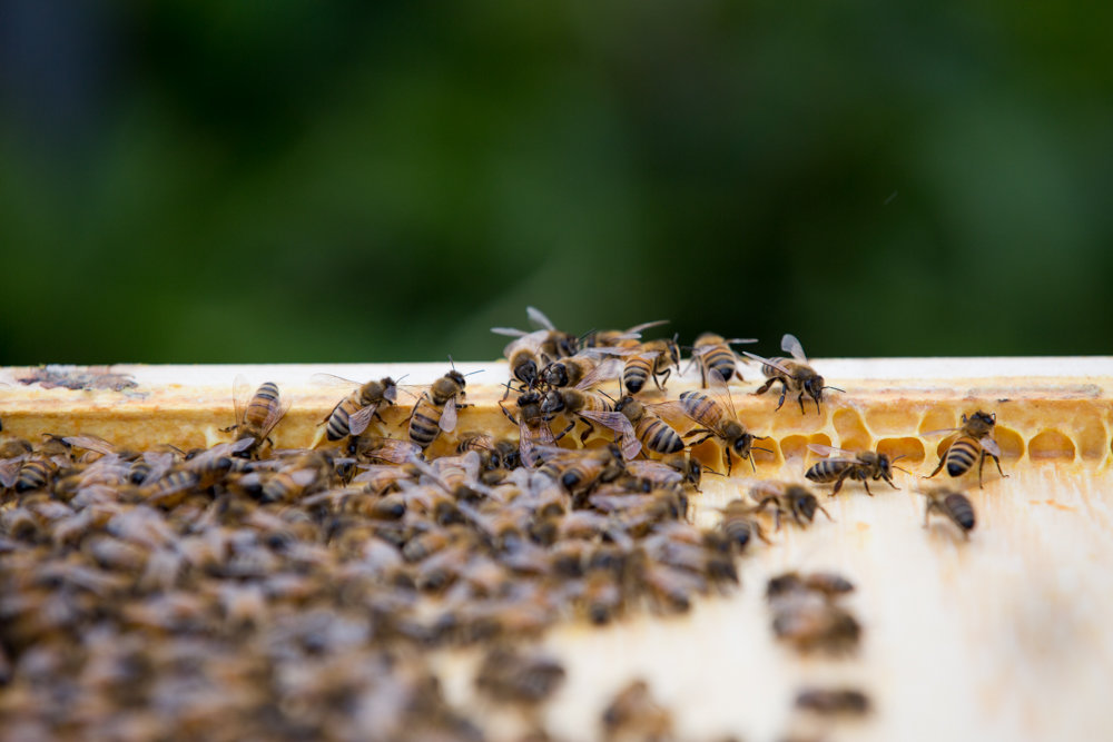 Busy bees go about their business in a rooftop beehive above the Kingsbridge Heights Community Center.