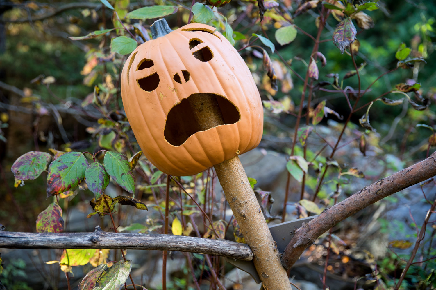 A spooked pumpkin scarecrow looks aghast in the Everett Children's Adventure Garden at the New York Botanical Garden.