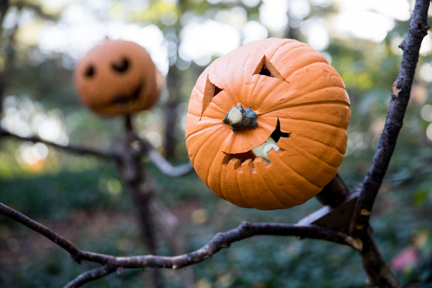 Pumpkin-headed scarecrows loom large in the Spooky Pumpkin Garden at the New York Botanical Garden.