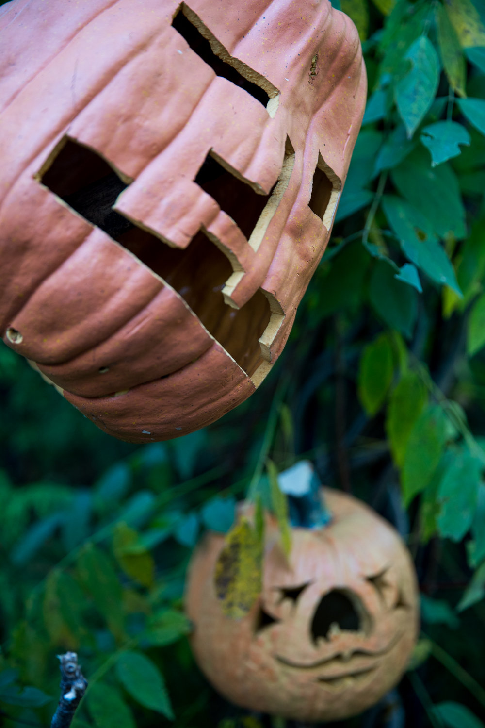 The New York Botanical Garden brought the spooky cheer with pumpkin-headed scarecrows in the Spooky Pumpkin Garden.