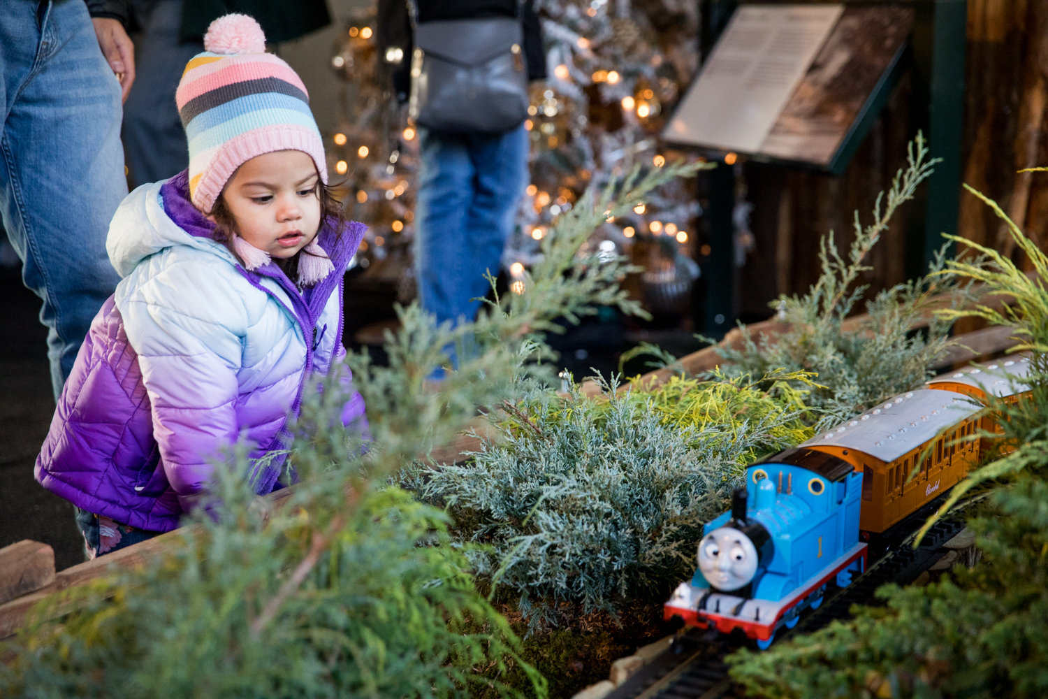 Olivia Lozada watches Thomas the Tank Engine roll past a replica of Yankee Stadium in the Holiday Train Show at the New York Botanical Garden.