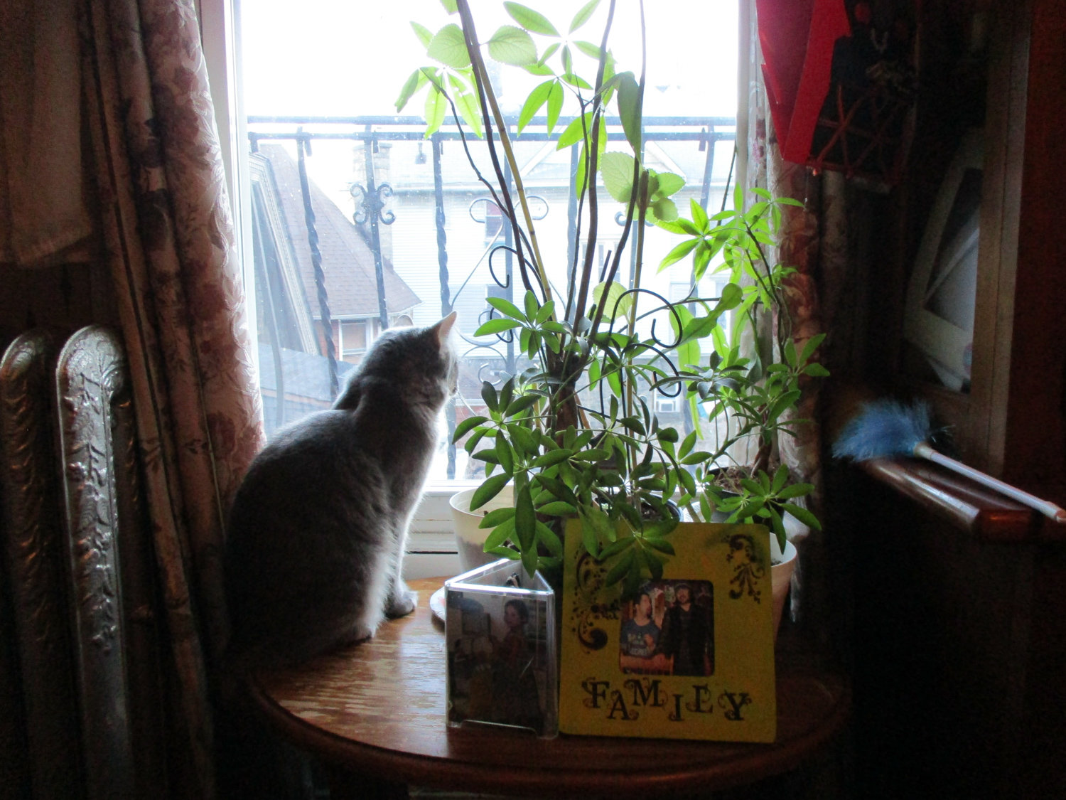 Bronx Senior Photo League member Carmen Moyer photographed a tranquil scene of her cat looking out the window.