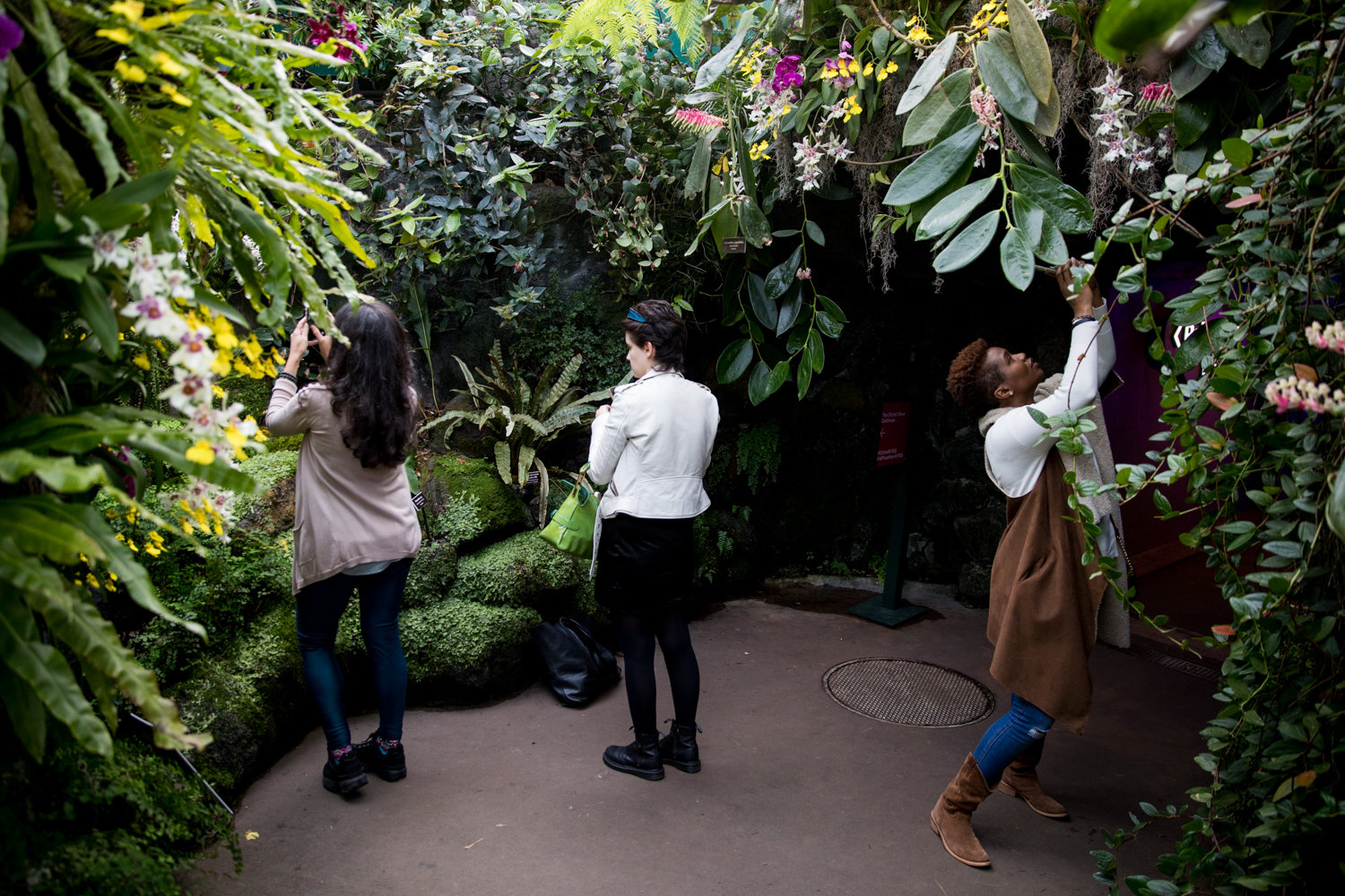 Visitors take pictures of the orchid displays after passing through the rainbow tunnel.