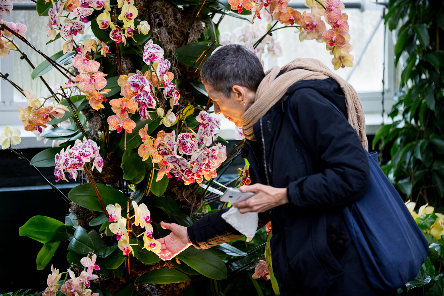 A visitor looks at an orchid at the New York Botanical Garden.