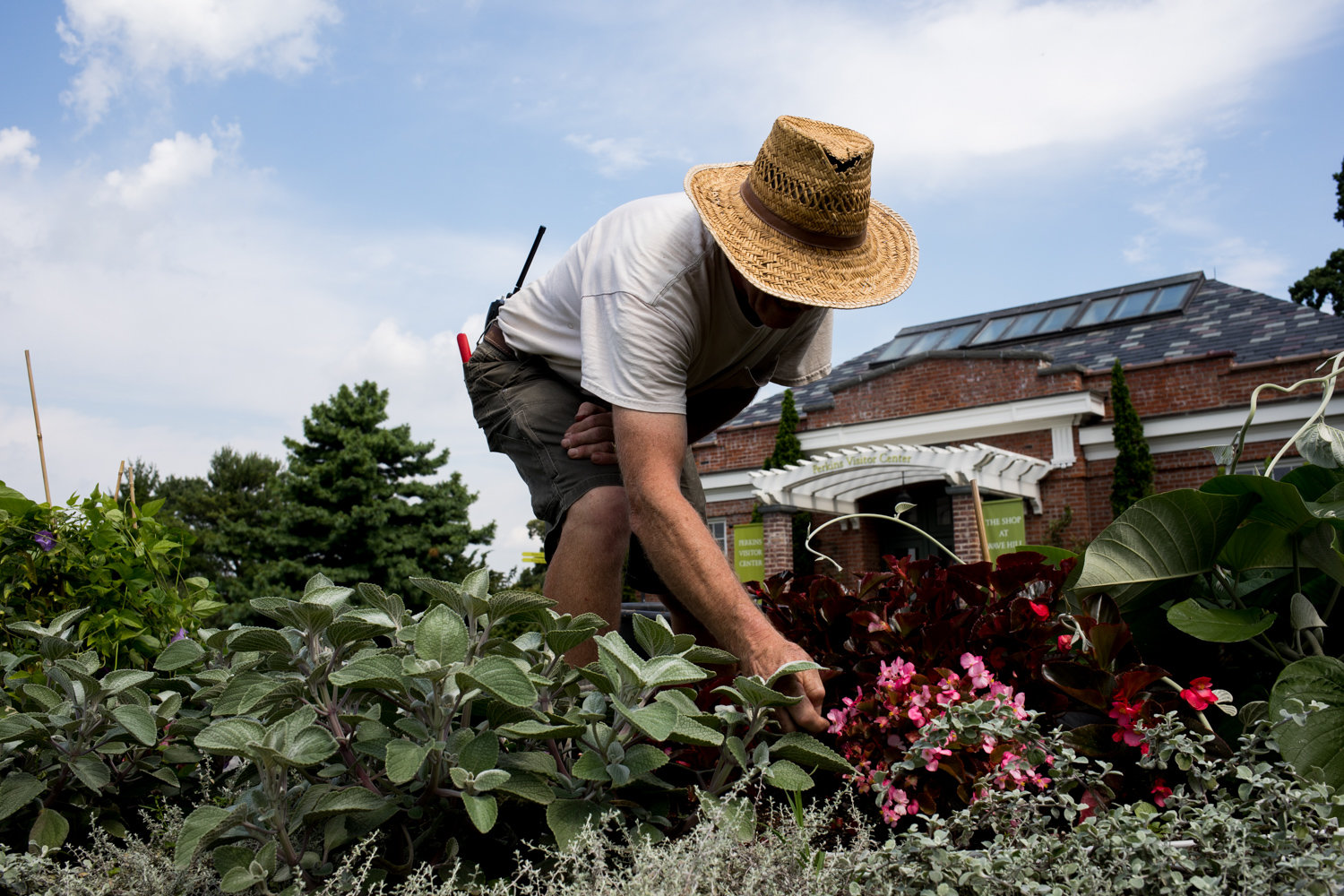 Louis Bauer, Wave Hill's horticulture director, tends to the Paisley Bed in 2018. Since the garden closed its doors to visitors as a result of the coronavirus pandemic, a core crew of gardeners have worked to maintain the grounds.