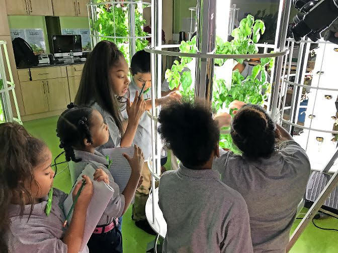 Green Bronx Machine specializes in indoor academic learning gardens where students grow produce using less space and water.