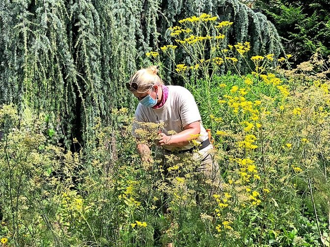 Wave Hill seasonal gardener Sandy Schaller tends to the gardens, as she and her fellow gardeners have done, even during Wave Hill's closure. The gardens have since reopened, although only through reservation.