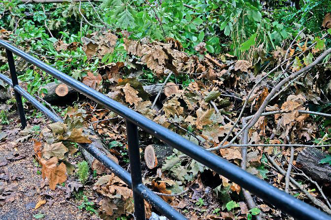 Small logs were pushed into the greenery away from a walkway strollers use through Vinmont Veteran Park. The logs are part of a dying tree first noticed by park-goers two years ago, and was finally brought down recently — likely by Tropical Storm Isaias.