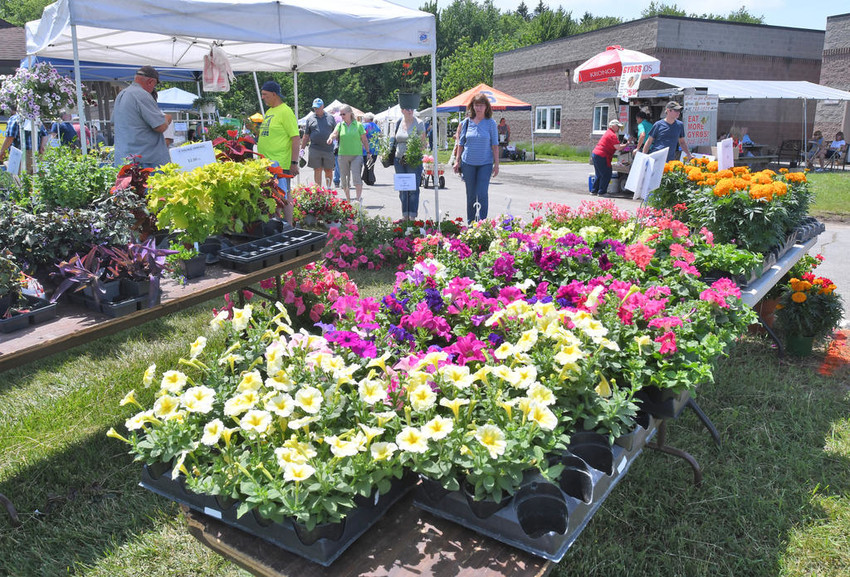 HERB FEST —Visitors enjoy the 21st annual Herb and Flower Festival at Cornell Cooperative Extension of Oneida County.  (Sentinel file photo by John Clifford)
