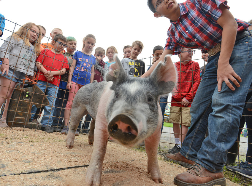 HAMMING IT UP  —Princess the pig greets a gleeful crowd of Camden Elementary School fourth-graders in Kathy Graham's and Kittie Popple's classes during Farm Fest 2019 activities at Brabant Farm, 6166 Happy Valley Road in Verona.  Farmer Chris Van Lieshout shared interesting tidbits about Princess and growing up on a farm with the students.  Farm Fest is an annual program  co-sponsored by the Oneida County Farm Bureau, Oneida County Dairy Promotion and Cornell Cooperative Extension of Oneida County. (Additional photos, page 2)