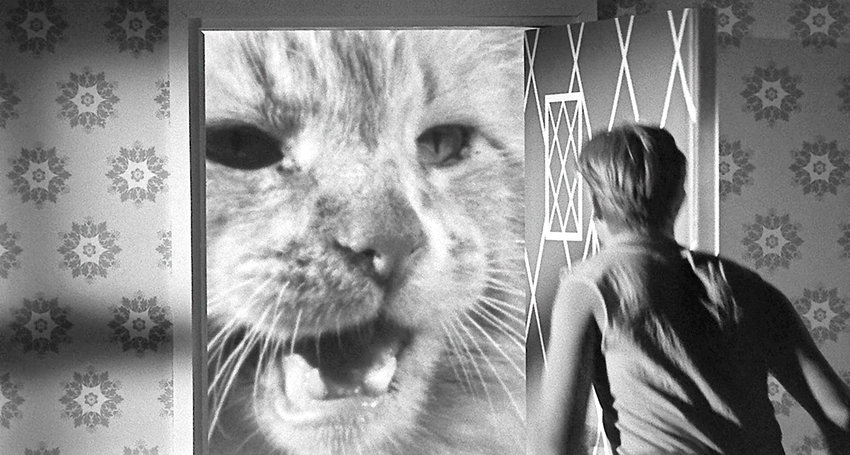 """TINY — Orangey the Cat and Grant Williams in """"The Incredible Shrinking Man."""""""