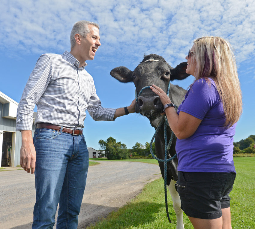 MOO JUICE — Congressman Anthony Brindisi is greeted by Terri DiNitto and Flare, one of the farm's some 1,200 cows, prior to a press conference on maintaining availability of chocolate milk for public school children in New York City Monday, Sept. 16 at DiNitto Farm on Benton Road in Marcy.