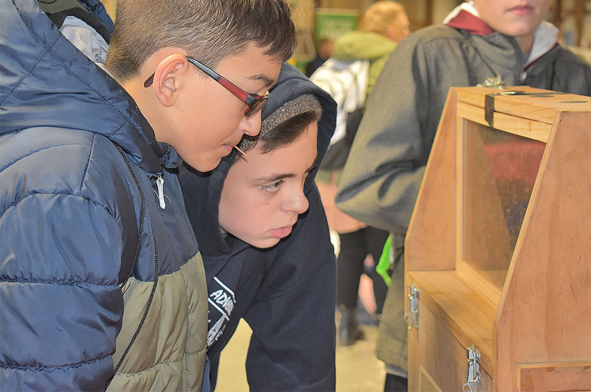 WHAT'S BUZZING? —Westmoreland seventh-graders James Gleason, left, and Andrew Holzhauer check out a beehive from Ford's Honey Farm during the third annual Farming Your Future event that was held Friday at the Herkimer County Fairgrounds.