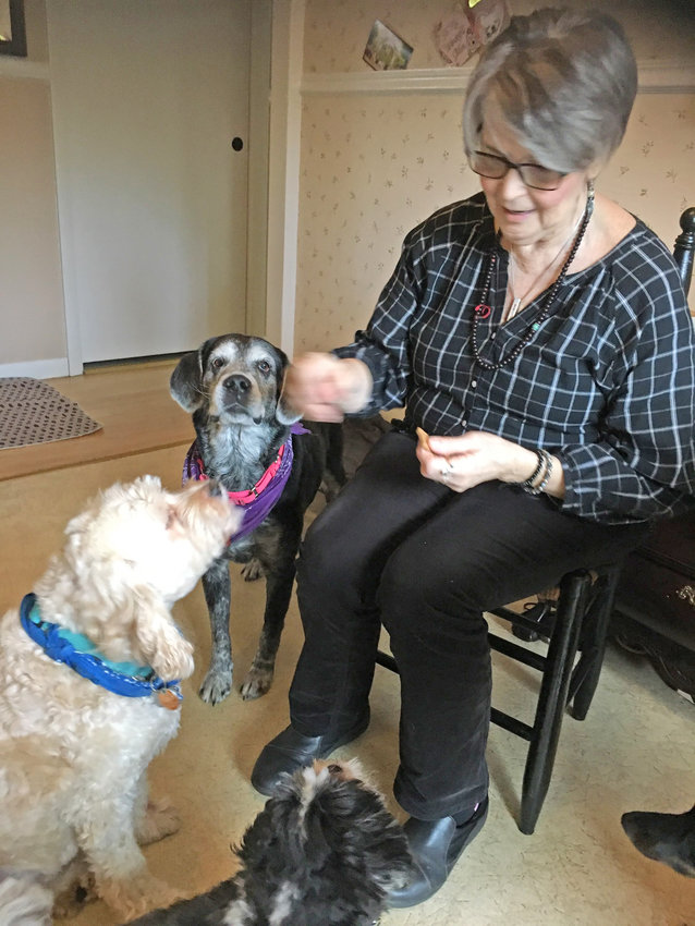 TREAT TIME — Linda Mackos hands out treats to some well-behaved elderly rescue dogs that she fosters at her Yorkville home.