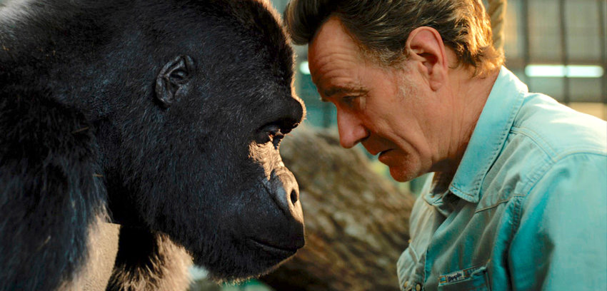 """family friendly — Bryan Cranston, right, with a gorilla named Ivan, voiced by Sam Rockwell, in a scene from """"The One and Only Ivan."""""""