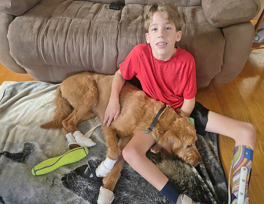 REUNITED — The Waterman family has been reunited with Tia, their four-year-old labradoodle.   Andrew Waterman, 13, sits with his canine companion, whose paws are wrapped after having been injured during her ordeal.
