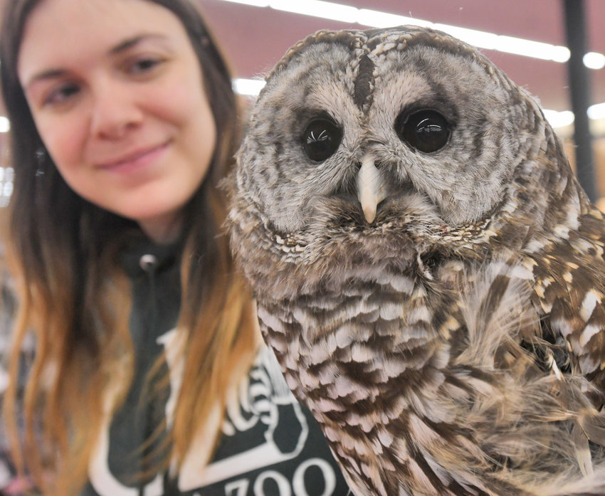 All about Owls — Grace, a barred owl, with Kathleen McGill. Grace is one of Utica Zoo's ambassador animals. On Feb. 11, the zoo will offer an online program featuring the nocturnal birds of prey.