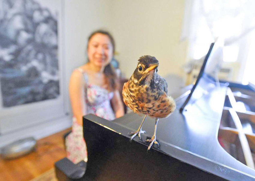 RESCUE ROBIN — Pianist Nicole Wang, and her rescue robin, Ali, who accompanies her.